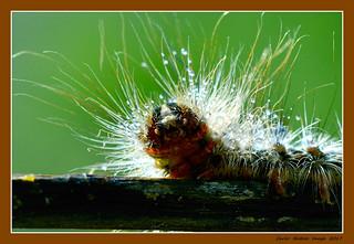 Macro study on caterpillar - 3
