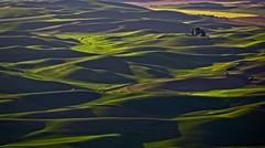 Palouse Wheat Fields - Late Afternoon (Alan Amati) Tags: amati alanamati america american usa ut washington wa northwest nw pacificnorthwest palouse wheat wheatfields fields hills rolling farm farms agriculture spring late lateafternoon topography terrain landscape cplfax spokane steptoe steptoebutte butte eastern afternoon light undulating curves mounds folds vista view viewpoint state park june topf25