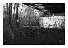 13. Lizard (kotmariusz) Tags: jaszczurka painting most bridge bystrzyca monochrome blackandwhite bw monochrom analog ilford filmphotography 35mm scan olympusom40 polska poland świdnica swidnica fotografia lizard
