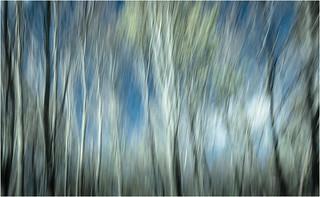 den Wald vor lauter Bäumen