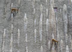 Vertical geometry (Michele Remonti) Tags: capraibex ibex stambecco barbellino diga dam lombardy italia italy lombardia valleseriana