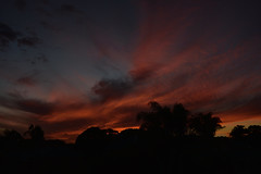 Under the fire (Images by Jeff - from the sea) Tags: sunset clouds bluesky redsunset orangesunset outdoor palmtrees tamronsp2470mmf28divcusd nikon d7200 dusk twilight bundaberg queensland australia june 2017 goldenhour downunder 1000v40f 1500v60f