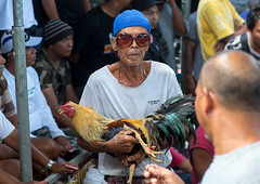 A cock being held back by its handler during a cockfigting event, Bali island, Canggu, Indonesia (Eric Lafforgue) Tags: adult adults adultsonly animals asia asian bali bali3162 balinese bet betting birds blood bloodsport chickens cockfight cockfighting cockfights cocks cruel cultures domestic feathers festival fight fighting gamble gambling game groupofpeople horizontal illegal indonesia indonesian lookingatcamera menonly roosters sport sunglasses traditional canggu baliisland