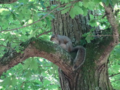 Squirel In Tree (CreatureStream) Tags: squirel in tree
