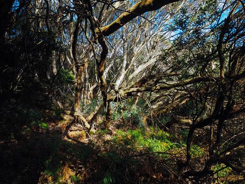 Walk 3 - Cape Nelson Loop by warrick1, on Flickr