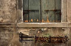 il pollice verde ... (Rino Alessandrini) Tags: finestra facciata muro decadente abbandonato vaso pianta urbano abitazione chiuso scrostato abandoned window vase urban plant closed enclosed house rust decadent decay