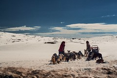 Road to Nowhere (EDB__Photography) Tags: polar norway hardangervidda dogs pets adventure travel reportage nature ice snow sky north northern light arctic natgeo sled dog sledding northpole pole extreme wild