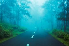 Ponmudi (Ajith Panayil) Tags: hillstation hill fog tree green travel trivandrum trip road trucking kerala india grass nature landscape blue sky cloud noperson photo photography