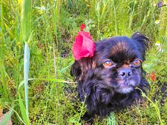 Зверушки 0396 (2016.05.21) (vladsky78) Tags: ильичёвск животные зелень цветы поле собака