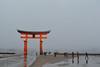 Pillar (Jennifer Lea) Tags: miyajima japan deer sigma art lense 30mm nikon adventure