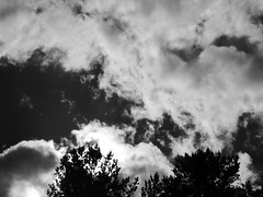 Sun behind the clouds (jondewi52) Tags: black blackandwhite branches clouds cloud landscape leaves monochrome nature no nophilter photoshop people sky sun tree trees outdoor outdoors white nofilter