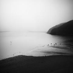 Sonoma County in morning fog study no.5 (Sebastian (sibbiblue)) Tags: bsquare acros blackandwhite xpro2 fujifilm morning fog sonoma usa