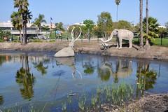 03-17 Lake Pit (megatti) Tags: ca california labreatarpits losangeles mastedons palmtrees tar tarpit