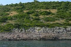 _XIS4714-333 (jozwa.maryn) Tags: brač croatia chorwacja adriatic adriatyk