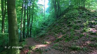 Wanderung 10.06.2017 Kassel Bergpark