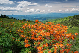 Roan Mountain (North Carolina-Tennessee State Line)
