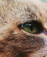 Chat 📷🐱 (Alex42100) Tags: demoi oeil chat yeuxvert grabouillon photographie cat greeneyes
