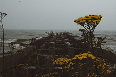 (Flimmy) Tags: throwback flimmy rosemarie lucht roselucht grain pier dock lake michigan wisconsin lakemichigan yellow flowers weeds water fog mist dark seagulls seagull birds foggy grainy waves beach shore gloomy gloom canon summer august