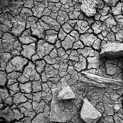 Arid | Wistow (Daniel Tindale) Tags: arid dam creek dry crack cracking pattern mud black white gray summer landscape abstract decay decayed heritage history icon iconic rural pastoral farm farming farmland country countryside rustic australian native wistow bugle ranges bugleranges roadside adelaide hills adelaidehills south australia southaustralia sa daniel tindale danieltindale thom sullivan thomsullivan poet poetry poem pentax k20d stone rock wood