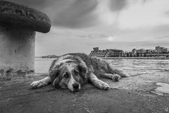 Liza. A stray dog... (Vangelis Tzertzinis/GDISTUDIO.COM) Tags: dog piraeus bw bythesea sad dock port georgina littledoglaughednoiret