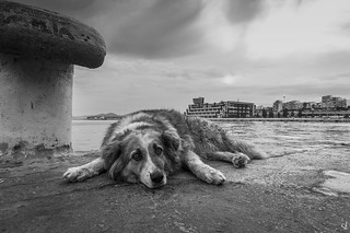 Liza. A stray dog...