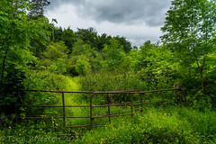 Forgotten Path. (Tony Brierton) Tags: 5617 bray cowicklow fields green kilruddery countywicklow ireland