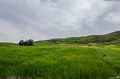 Simple Nature (haddadzakaria) Tags: algeria cloudy day jijel landscape spring water green
