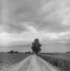 Uncommon view (Other dreams) Tags: flat flatland fields road tree central symmetric cloudy clouds stormy wheat valley npk rolleiflex xenotar fp4 id11 11 film analog orangefilter