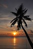 Koh Samui 171 Sun & Tree (SwissMike62) Tags: thailand kohsamui sunset beach romanticsunset light palmtree sky