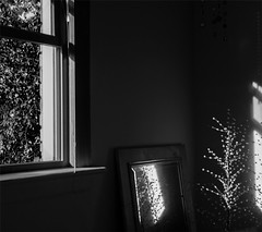 bedroom window :: 2 (dotintime) Tags: bedroom window tree greenery will angle slant light dark mirror glass crystal wire mood dotintime meganlane
