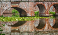 Bridge Reflections (FLAWLESSFOCUSLTD) Tags: mr greatphotographers old symmetrical symmetry brick herstmonceux castle waterlily lilypad lily lake water moat bridge reflections