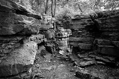 Rocky Path (Jay Janssen) Tags: rocks limestone path niagra escarpment high cliff state park blackwhite wisconsin
