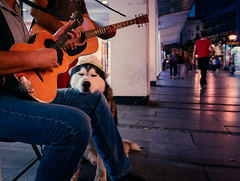 Music for my ears (Master Iksi) Tags: music guitar dog pet animals street joy sleep dream relaxing happy belgrade night nikond7100 sigma1750