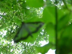Out of focus (ArtGordon1) Tags: moth insect walthamstow london uk summer davegordon davidgordon daveartgordon davidagordon daveagordon artgordon1
