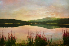 Nordic light (Birgitta Sjostedt) Tags: lanscape paint texture lak mountain reflection night twilight flower fireweed art unique peaceful birgittasjostedt sweden ie magicunicornverybest