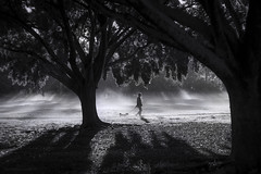 Good morning (gnarlydog) Tags: adaptedlens refittedlens fzuiko32mmf17 manualfocus urban dog dogwalk park fog mist monochrome blackandwhite bw trees silhoutte contrejour backlit highcontrast australia morninglight