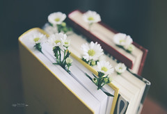 ... (tatiana_brown) Tags: books stilllife lifestyle flowers booklover film