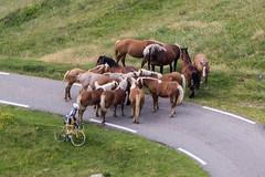 Col de Pailhères (Ariège) (PierreG_09) Tags: ariège pyrénées pirineos montagne pailhères coldepailhères portdepailhères col port donezan faune troupeau transhumance cheval estive eu