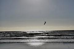 Air (stef_thomp) Tags: manzanita oregon beach kitesurfing kiteboarding pacificnorthwest surf
