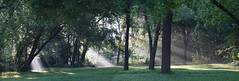 morning fog panorama (fiddlejean) Tags: humid humidity rays sun fog trees park helios 44