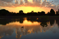 Last Goose (NaturalLight) Tags: canadagoose goose sunset pond water reflections chisholmcreekpark wichita kansas