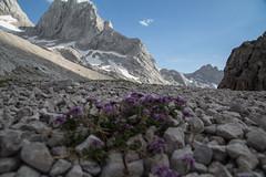 expo-8342 (ernst.scherr) Tags: rot adamekhütte gosau dachstein salzkammergut gletscher schnee natur mondaufgang mondlicht sonnenuntergang alpen pflanzen