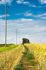 2017 The wireline (jeho75) Tags: sony ilce 7m2 g macro deutschlandgermany harzvorland telegrafenleitung wireline old summer sommer korn feldrain getreide acker
