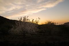 ALMENDROS EN FLOR 2 (www.beagalvan.com) Tags: flor arboles contraluz paisaje nubes almendros atardecer puesta de sol colores