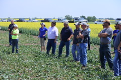 bayer-showcase-nd-17-149 (AgWired) Tags: bayer cropscience showcase plot tour 2017 soybeans canola wheat cereals corn north dakota agwired zimmcomm new media chuck zimmerman
