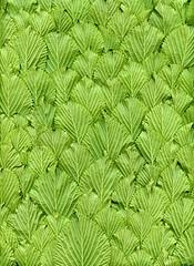 58307.01 Viburnum plicatum forma tomentosum 'Shasta' (horticultural art) Tags: horticulturalart viburnumplicatumformatomentosumshasta viburnum shastaviburnum leaves pattern bottom