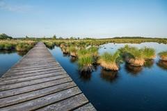 (p.bieniek) Tags: eifel hohes venn deutschland germany belgien belgium wandern hiking natur nature outdoor wasser water spiegelung reflektion mirror steg sonnenaufgang sunrise morgens morning