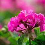 Beautiful Morning Colors thumbnail