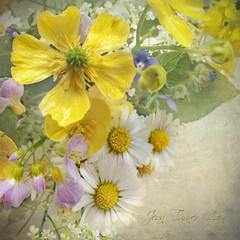 Wildflower Treasure (Jean Turner Cain) Tags: flower flora floral flowers fleur daisy bloem blomst buttercup texture textured textures adobe art photoshop jeanturnercain