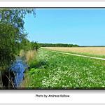 Andreas Kalbow Landschaft 2017.05.22 Fischland Darß (8) thumbnail